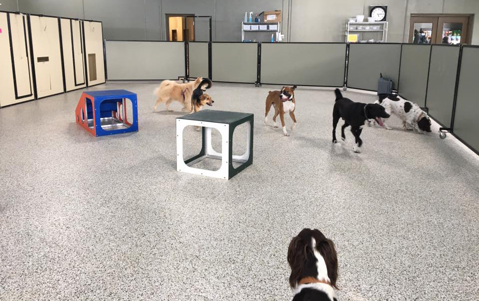 indoor dog park minneapolis