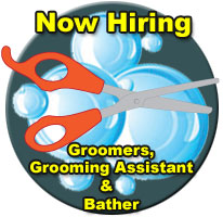 now hiring groomer